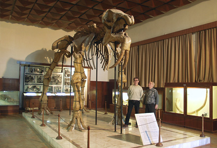 The Deinotherium skeleton in the Palaeontological branch of the NMNHS in Asenovgrad. Photo: (c) Aleksandar Zarichinov